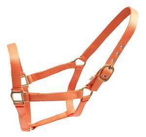 Crystal-Ace-Equestrian-Cob-Full-Horse-Head-Collar-Nylon-Halter-Headcollar-Orange