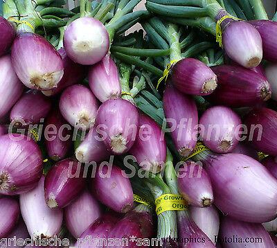 Zwiebel rot * RED BOTTLE * 100 Samen *vitaminreich * tolles Aroma Salat-Zwiebeln