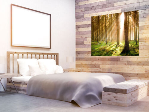 Forest Sunrise nature wallpaper trees photo wall mural 3801866 Forest