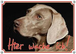 Weimaraner - Panneau d'avertissement en métal pour chien, bouclier, haut, vers le haut, A3 Disponible sur commande
