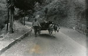 THEUS c. 1935 - Paysan et Attelage Alpes Maritimes - DIV 9149 qK7eD8ur-09163716-289916310