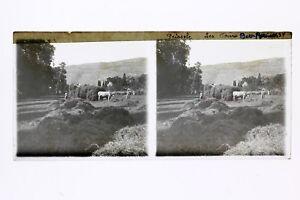 Francia-Feissole-Harvest-Foto-Stereo-T2L2n-Placca-Da-Lente-Vintage