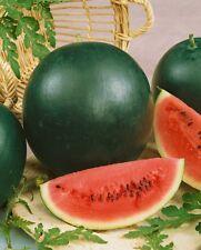 5 Graines BIO de Pastèque Petite Sucré / Fruit