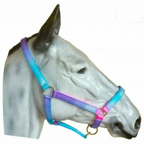 Unicorn Sheldon Signature Aqua Headcollar /& Rope Set