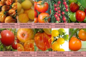 Tomatensamen-10-Spezialitaeten-Sorten-Samen-Set-Seltene-Raritaeten