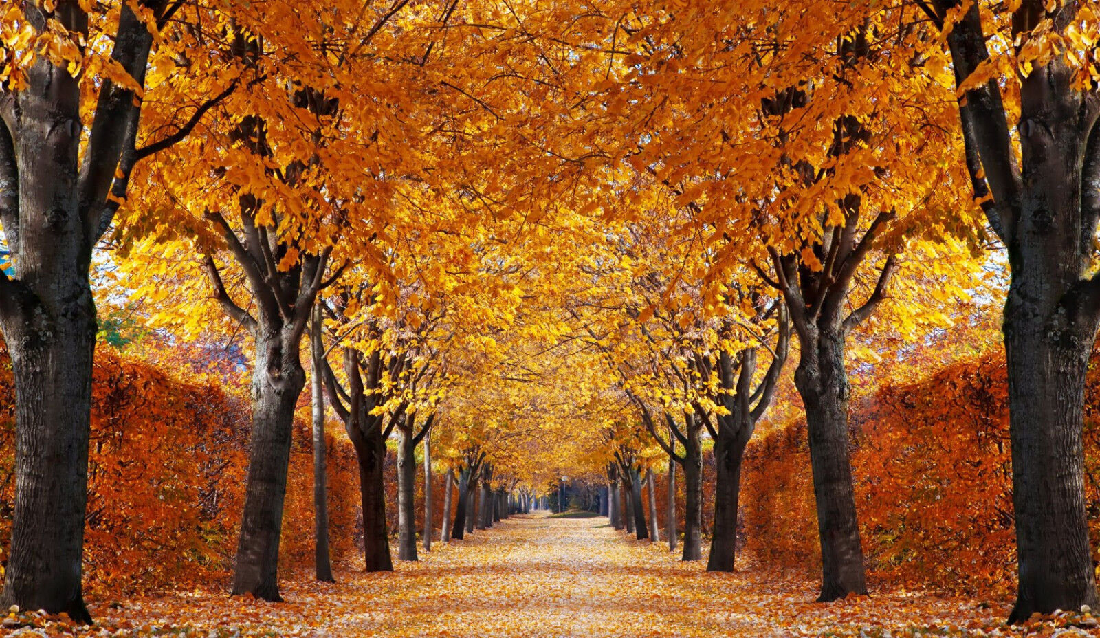 VLIES Fototapete-HERBST ALLEE-(333V)-350x260cm-7Bahnen 50x260-Bäume Allee Garten