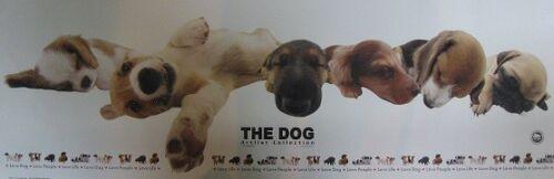 Slim Poster The Dog