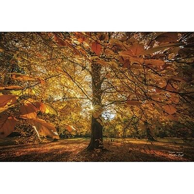MPP263 Framed or Plaque By Martin Podt Autumn Leaves Art Print