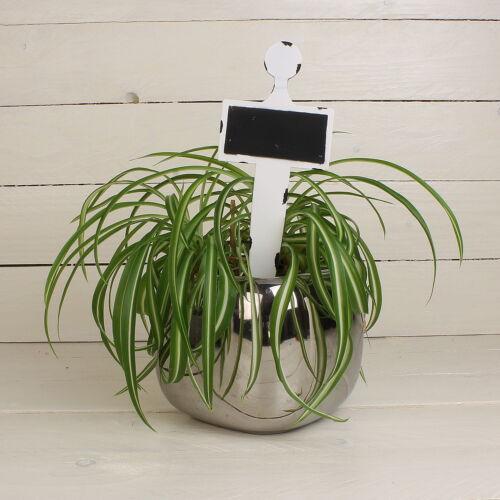 Erbe cartelli erbe Spina Metallo pflanzschilder piante spina 2er Set