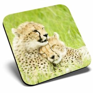 Square Single Coaster - Sweet Couple Cheetah Wild Cat  #14141