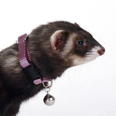 4x Cascabel de colores anilla para collar para perro gato periquito huron ninfa