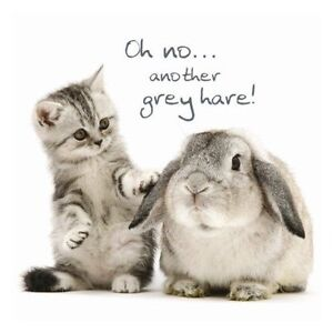 Image Is Loading Tabby Kitten Amp Rabbit Birthday Card Grey Hares
