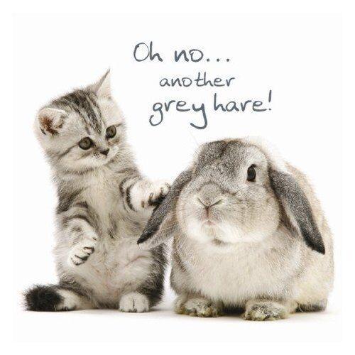 Tabby Kitten Rabbit Birthday Card Grey Hares Funny Cat Greeting