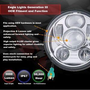 Eagle Lights 7\