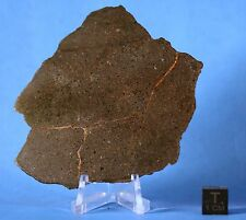 Huge full nwa 2835 H metachondrite meteorite slice 88x80mm largest I have!