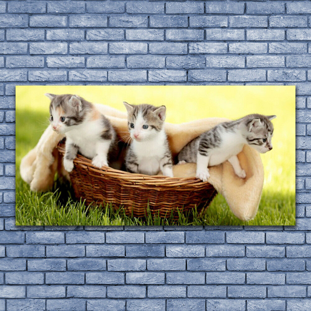Glass print Wall art 140x70 Image Picture Cats Animals