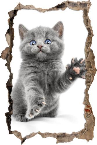 decoración Baby gato-gran avance en la 3d-look murales