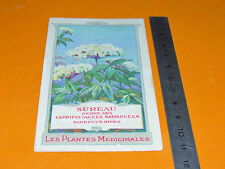CHROMO 1900-1920 BON POINT ECOLE PLANTE MEDICINALE SUREAU SAMBUCUS NIGRA