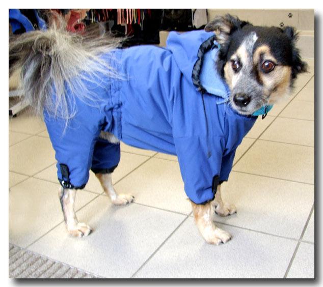 PORTHOS Wintermantel Schneemantel,Hundemantel,Mantel für Hunde     | Starke Hitze- und Abnutzungsbeständigkeit  51a962