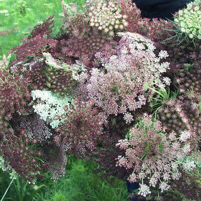 The wild cottage bedding flower seeds garden border  25g pure flower seeds