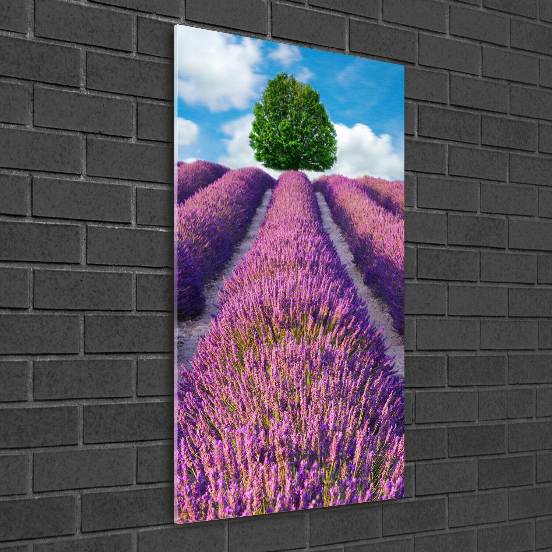 Immagine muro ARTE-STAMPA su duro-vetro perpendicolare 50x100 Lavanda Campo