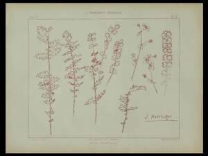 Initiative Petite Pimprenelle, Habert Dys -1896- Lithographie, Art Nouveau, Fleurs,