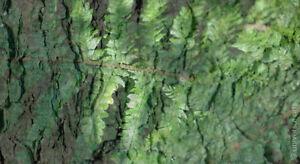 MARIO-STRACK-The-Forest-6-limitiert-Fotografie-Original-signiert-Bilder