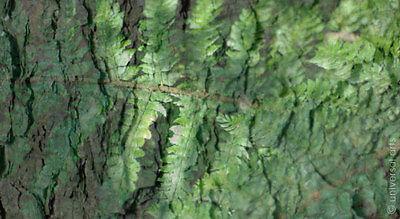 MARIO STRACK - The Forest 6 limitiert Fotografie Original signiert Bilder