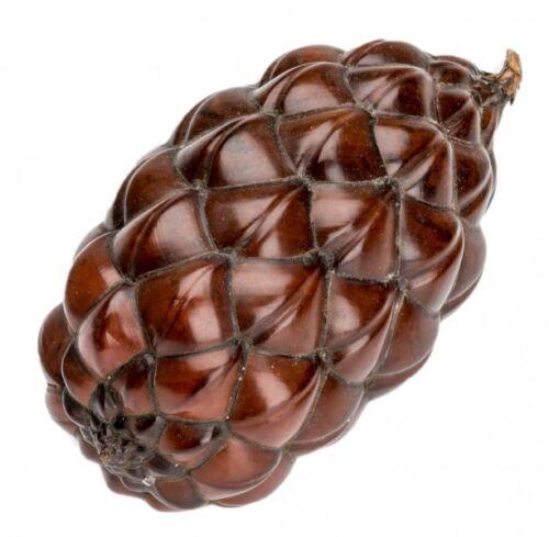 6-12cmRaphia fariniferaRaffia FruchtPalmenfrucht NaDeco® Thika Nuss ca