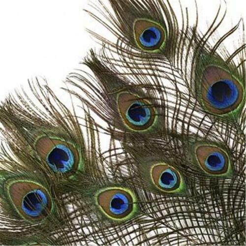 US Seller 10 Hand Selected Natural Colored Peacock Eye Feather Stems 12-14/""