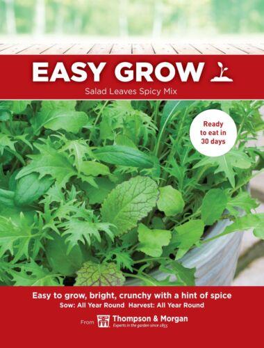 THOMPSON & Morgan-légumes-Salade Feuilles-Spicy Mix - 80 graines