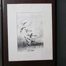 Duck Print, Matted, Pencil/Ink Drawing, Signed Mike Carroll