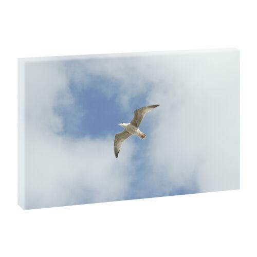100 cm*65 cm 265 Top Bilder Kunstdruck auf Leinwand XXL Nordsee Strand Möwe