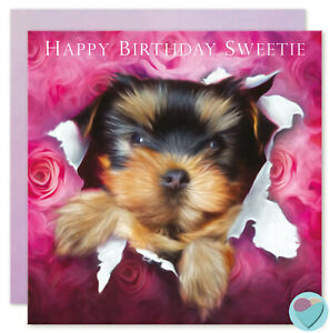 Details About Puppy Dog Yorkie Terrier Birthday Cards For Boys Girls Men Women Or From The