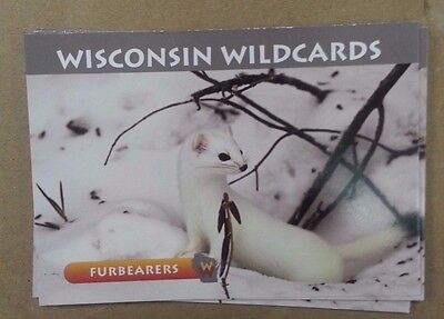 "FURBEARERS 3-1//2/"" X 2-1//2/"" RIVER OTTER WISCONSIN WILDCARDS"