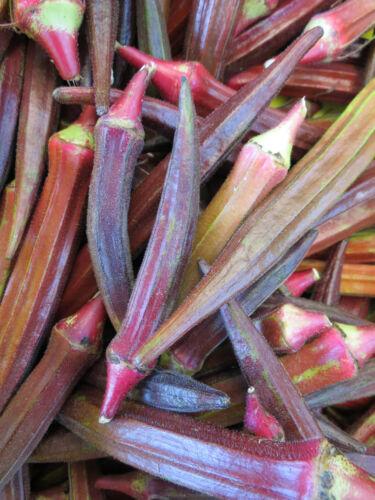 Purée rouge légumes guimauves 300 graines Abelmoschus succulentus