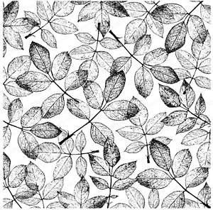 Impression Obsession CC353 Shaded Leaf Cover-a-Card Unmounted Cling Rubber Stamp