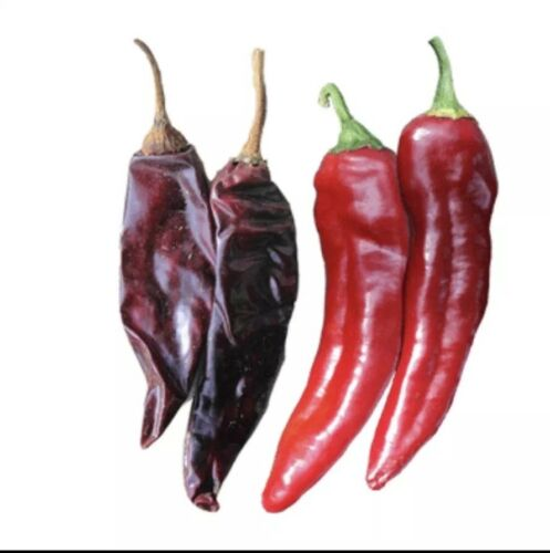 20 Mild Guajillo Pepper Seeds  USA SELLER Mirasol Chili Peppers