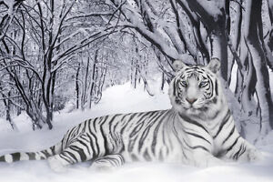 Image Is Loading White Tiger Home Decor Canvas Print A4 Size