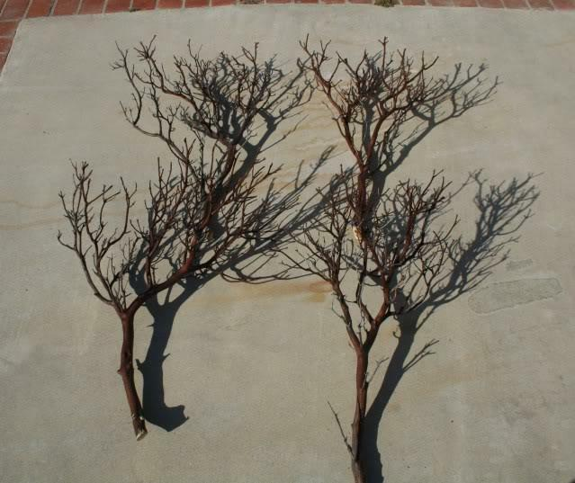 20 FULL 18  Manzanita Branches for centerpieces or wishing trees for wedding