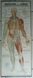 DEYROLLE-grande-planche-pedagogique-anatomique-CIRCULATION-DE-LA-LYMPHE