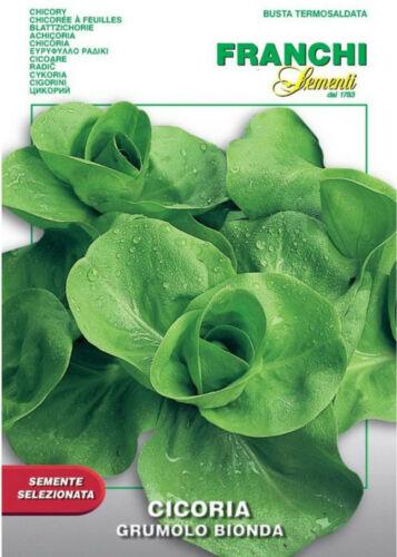 Negozio Professionale 600 Semi Seeds CICORIA Grumolo Bionda
