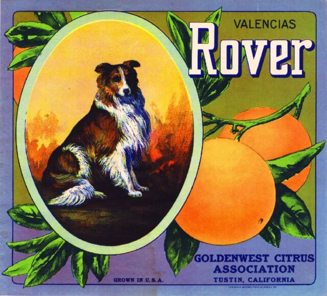 Tustin Rover Collie Dog Orange Citrus Fruit Crate Box Label Art Print