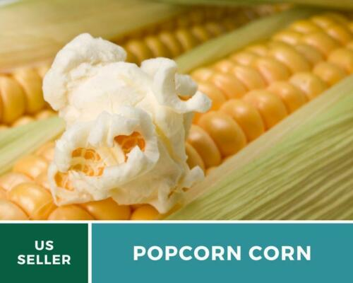 Yellow Popcorn Details about  /Corn Heirloom NonGMO 60 Seeds Grow Your Own Popcorn