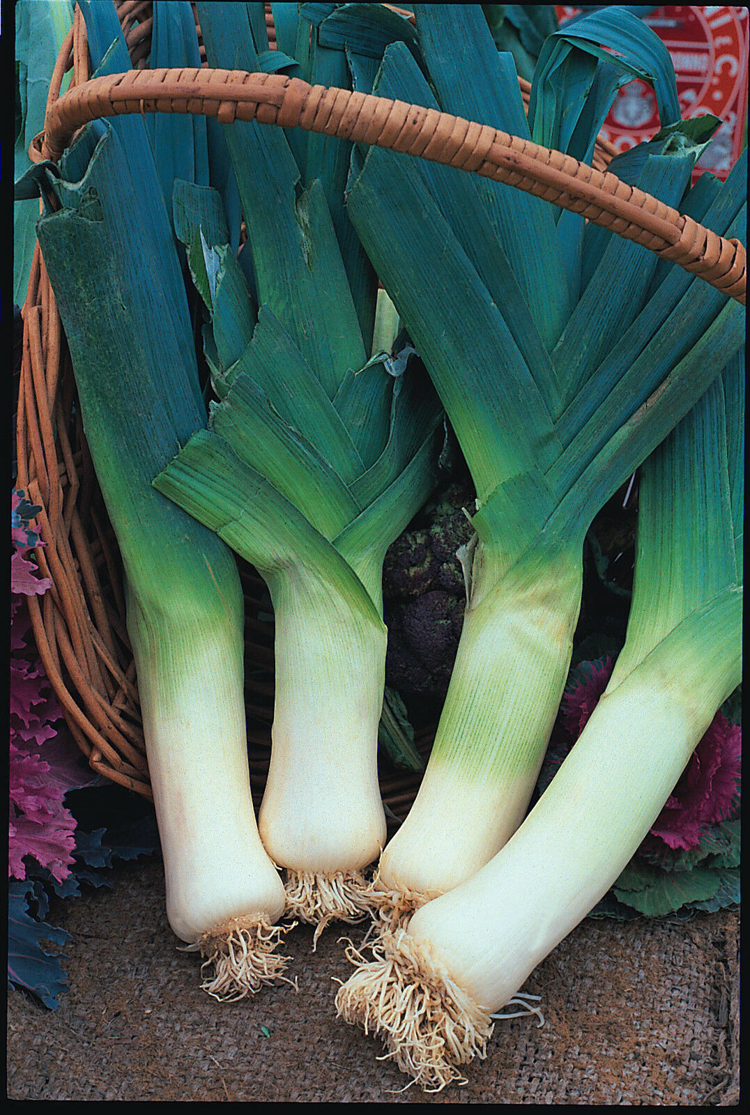 Vegetable Leek Giant Winter Appx 1,500 seeds