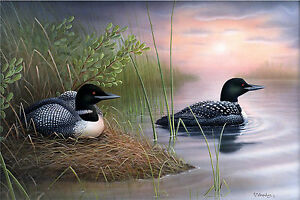 4-034-New-Expectations-034-Loons-26x16-Canvas-Print-by-Robert-Metropulos