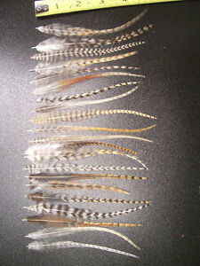 50 WHITING GRIZZLY CREE ROOSTER FEATHERS FOR HAIR EXTENSIONS METZ JEWELRY CRAFTS