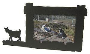 Pygmy-Goat-Picture-Frame-4-034-x6-034-H