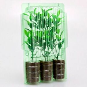 Clone Shipper 3 Plant cell +100 Hr LEDs Rockwool Plugs Propagation Germination