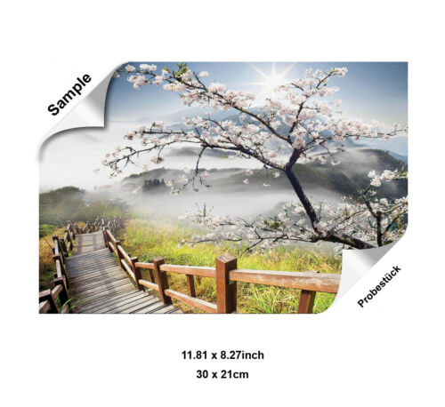 Papier Peint nappes papier peint nature paysage concentrées Cerisier Escalier en bois